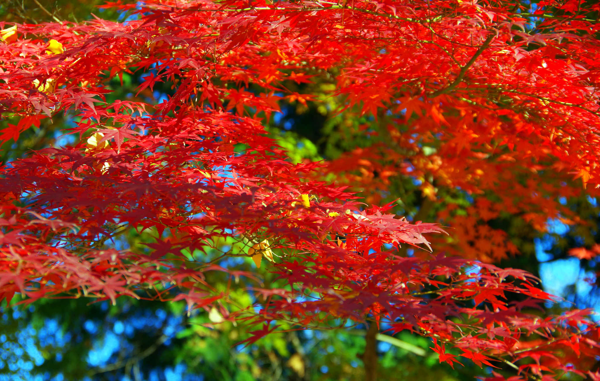 Kyoto : Top 8 des endroits où admirer les érables à l'automne