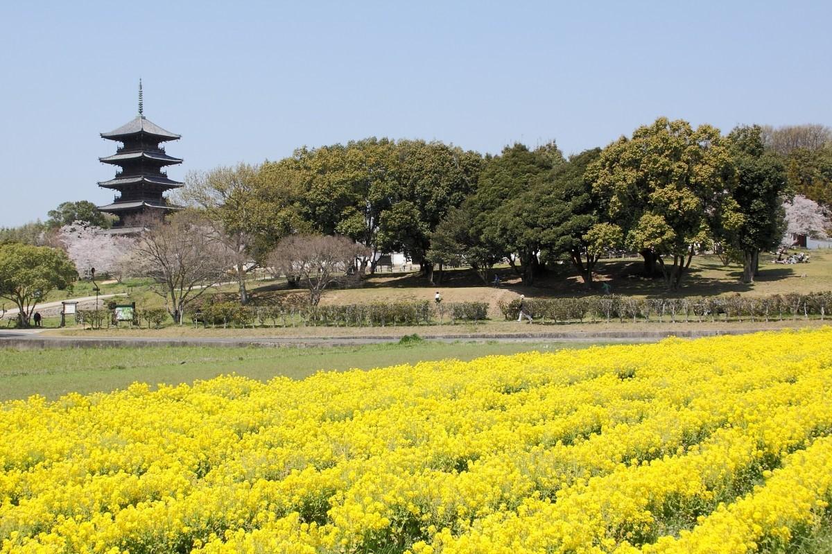 Balades à vélo dans la campagne japonaise
