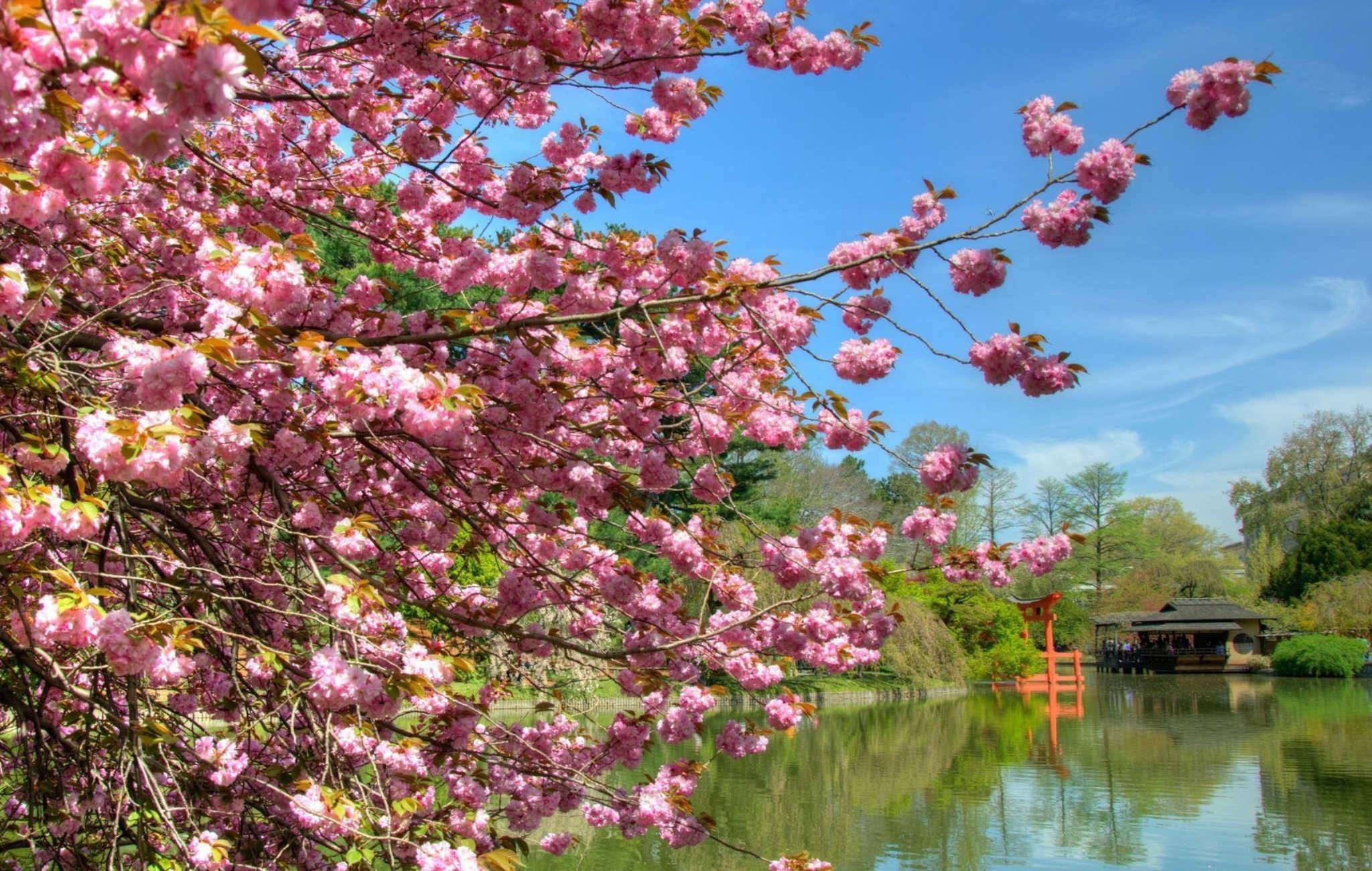 Partir Au Japon Au Printemps La Saison Ideale