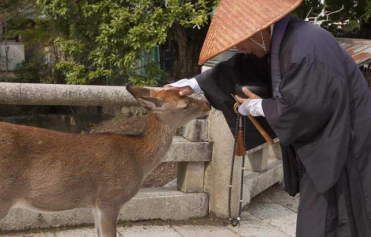 Visiter Nara : une ville d'art et d'histoire