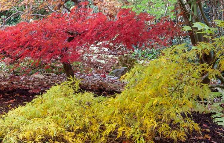 Quelles plantes dans un jardin japonais