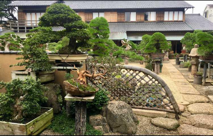 Shunka-en, le musée du bonsaï de Kunio Kobayashi