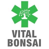 Coaching bonsai pour réussir dans cet art japonais