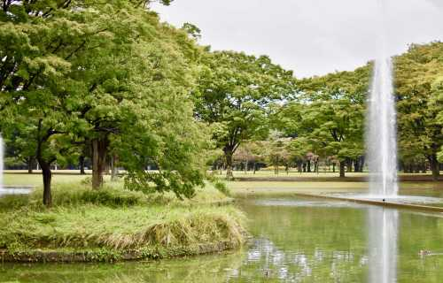 Yoyogi, un espace vert en plein quartier populaire de Tokyo