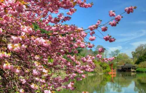 Partir au Japon au printemps : la saison idéale