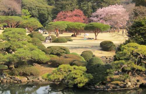 Shinjuku Gyoen à Tokyo : trois espaces dans un magnifique parc