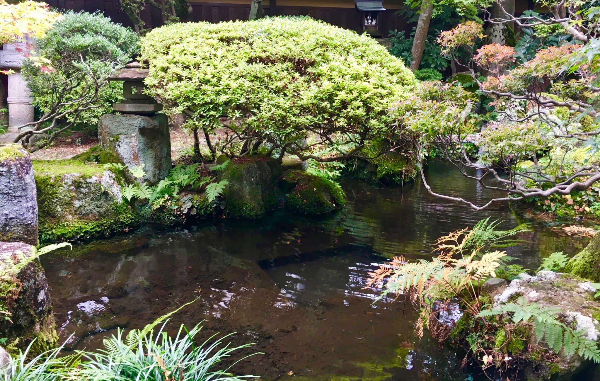Jardin japonais avec une énorme azalée de plus de 300 ans
