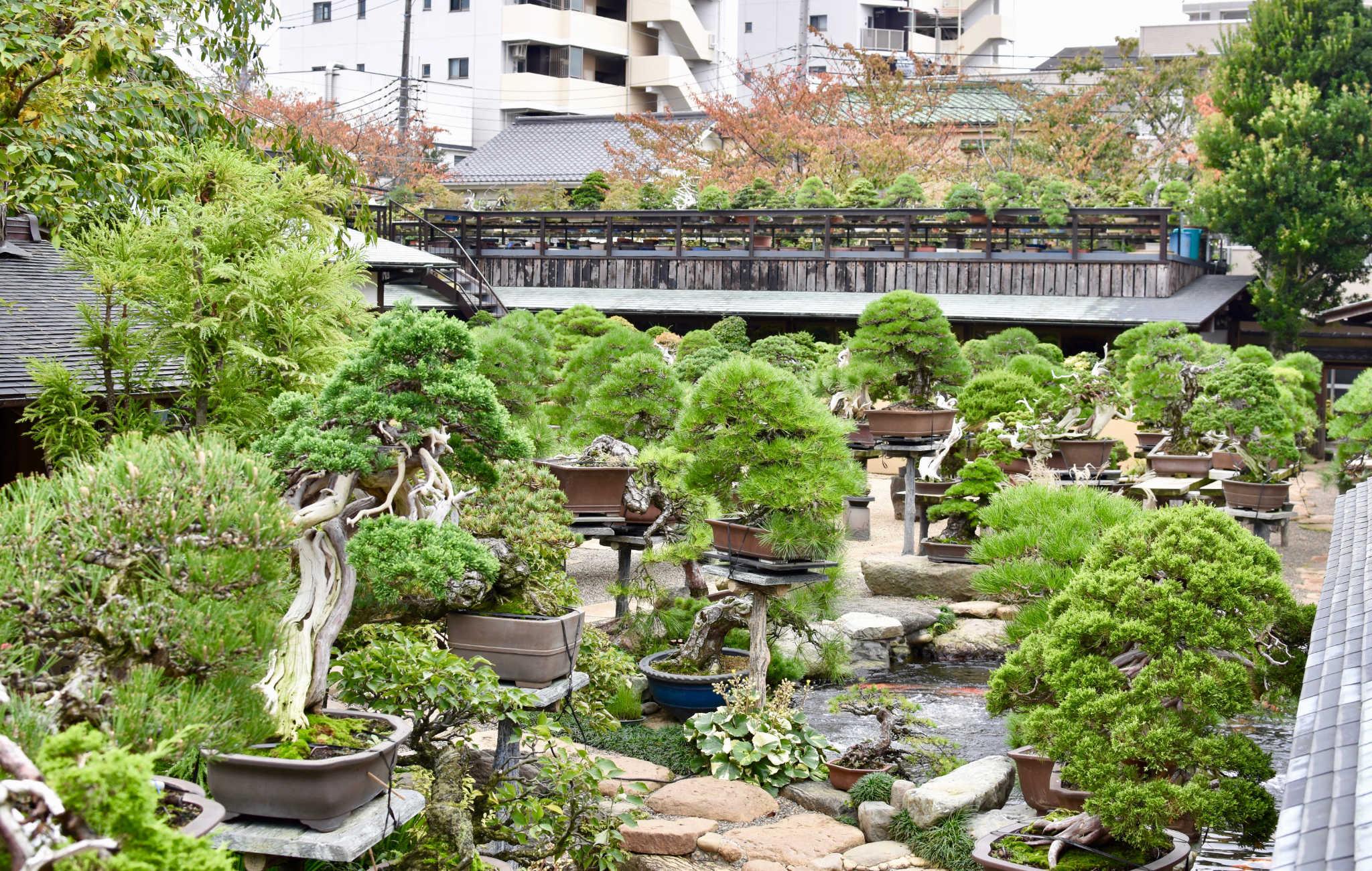 Vue du jardin shunka-en de Kunio Kobayashi