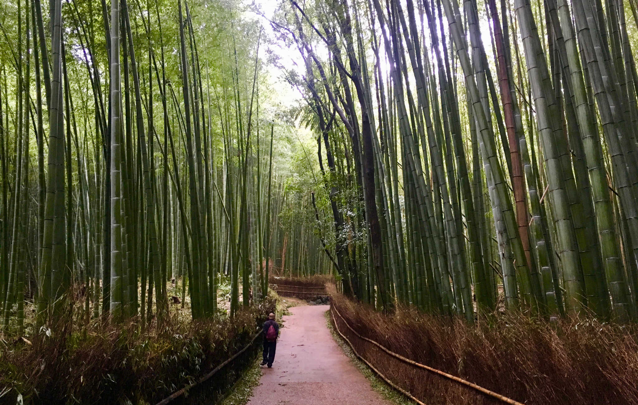 Tôt le matin, la lumière est très particulière entre les bambous