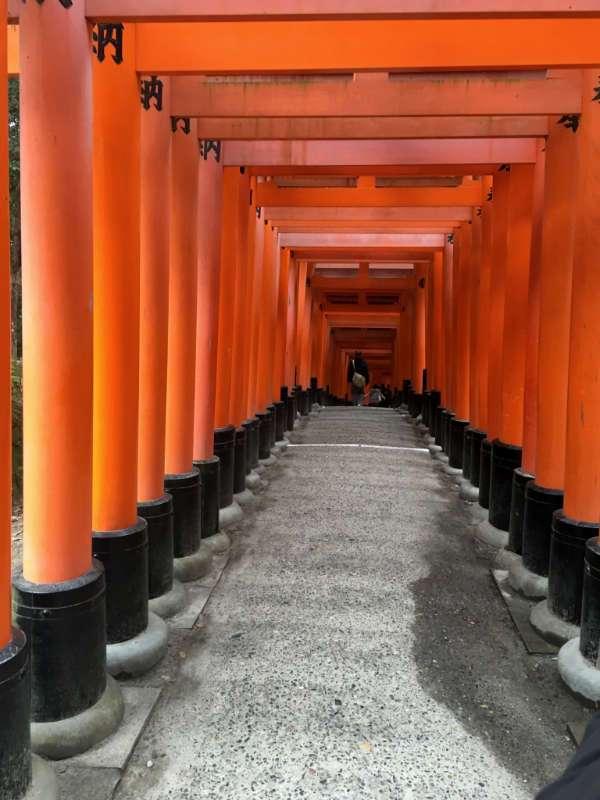 Les torii forment un véritable tunnel