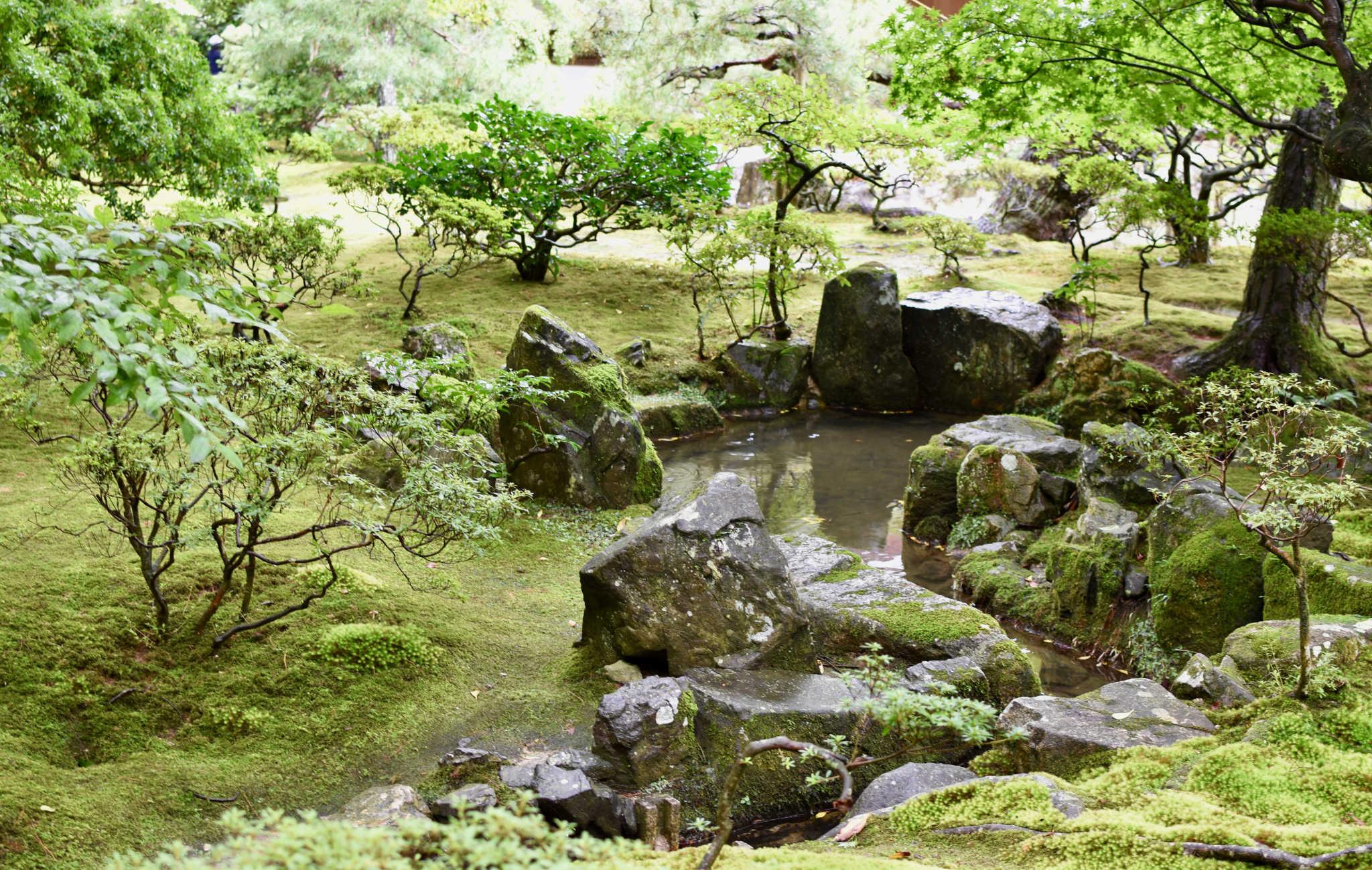 Mélange de roches et de mousse autour d'un petit ruisseau
