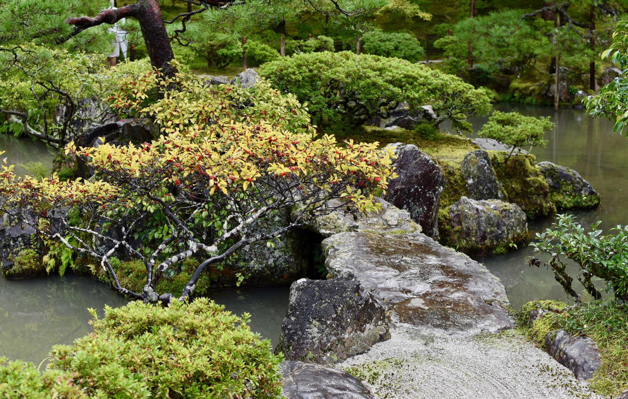 Végétation et roche se mèlent pour le plaisir des yeux