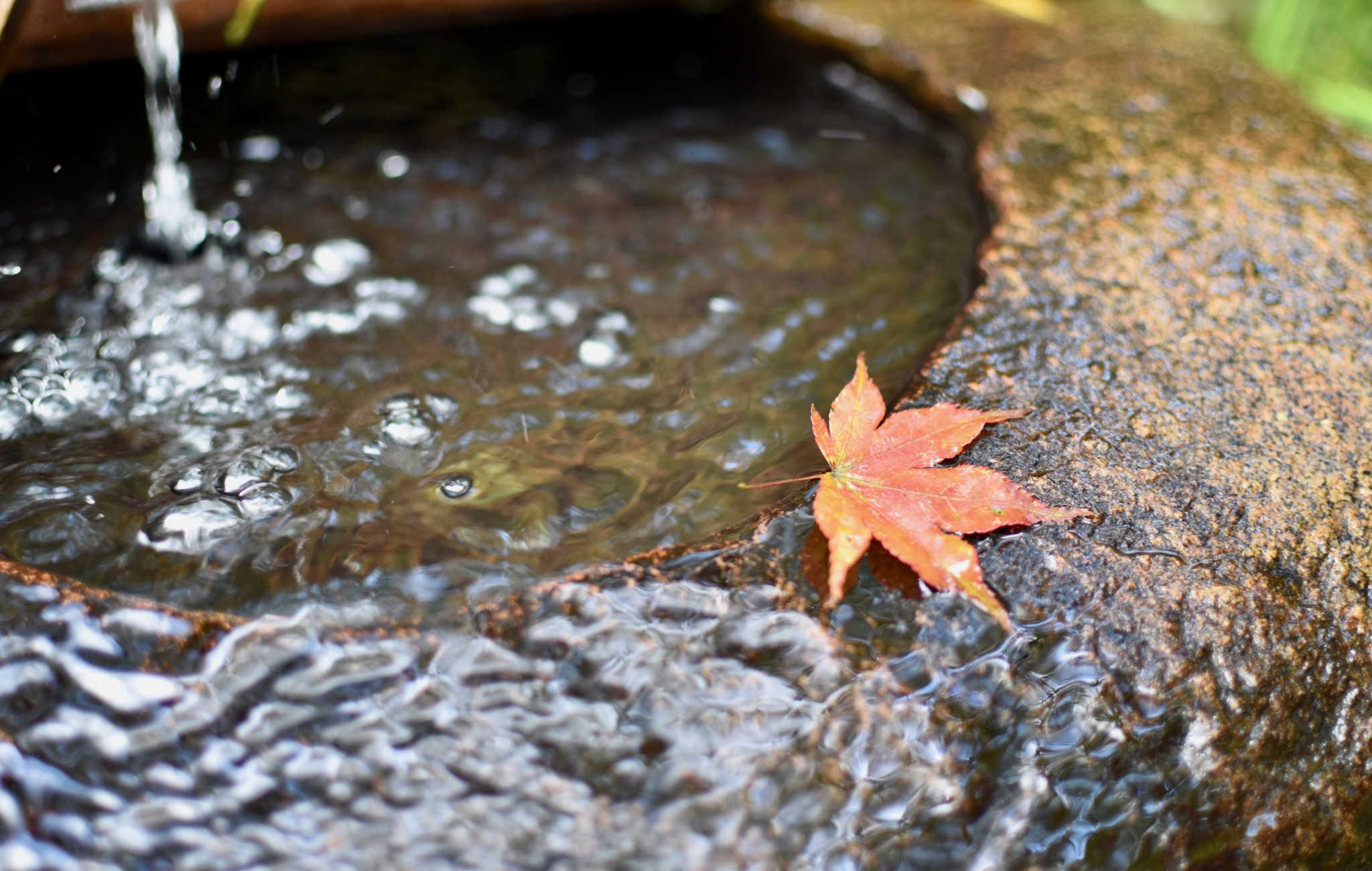 Délicate feuille d'érable sur le bord du tsukabai