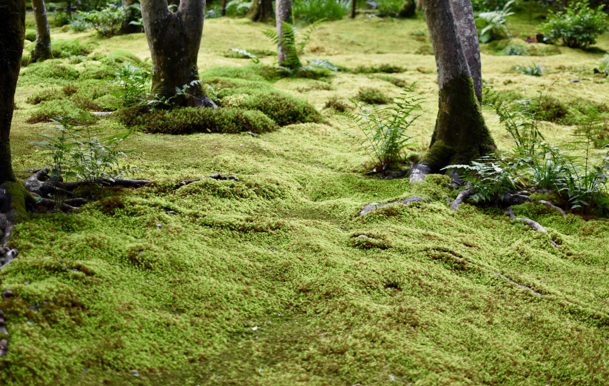 Au sol, de véritables tapis de mousse