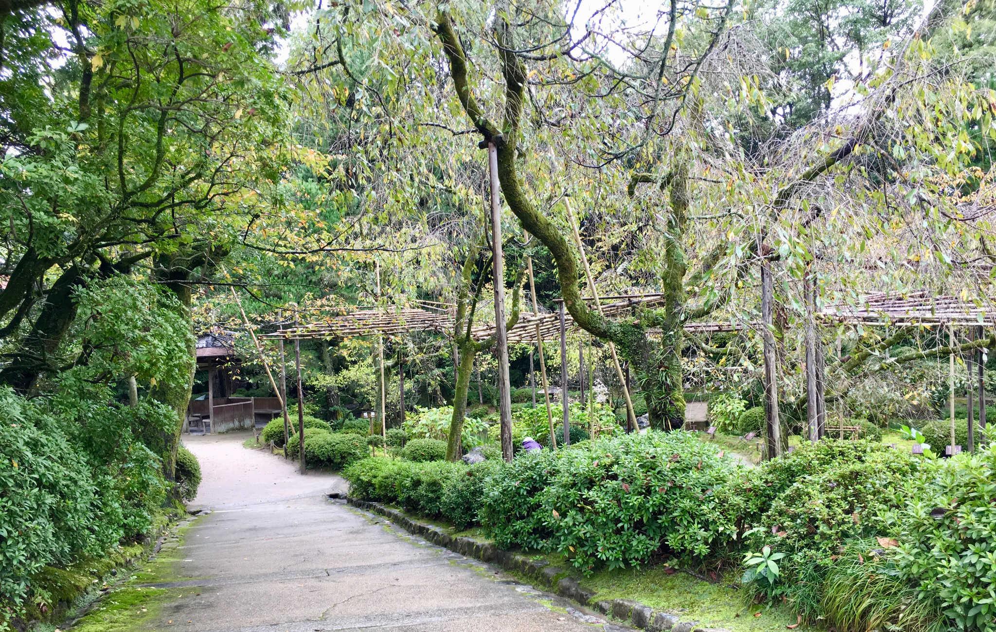 Le jardin est remarquable par ses cerisiers, c'est un endroit très populaire au moment de leur floraison