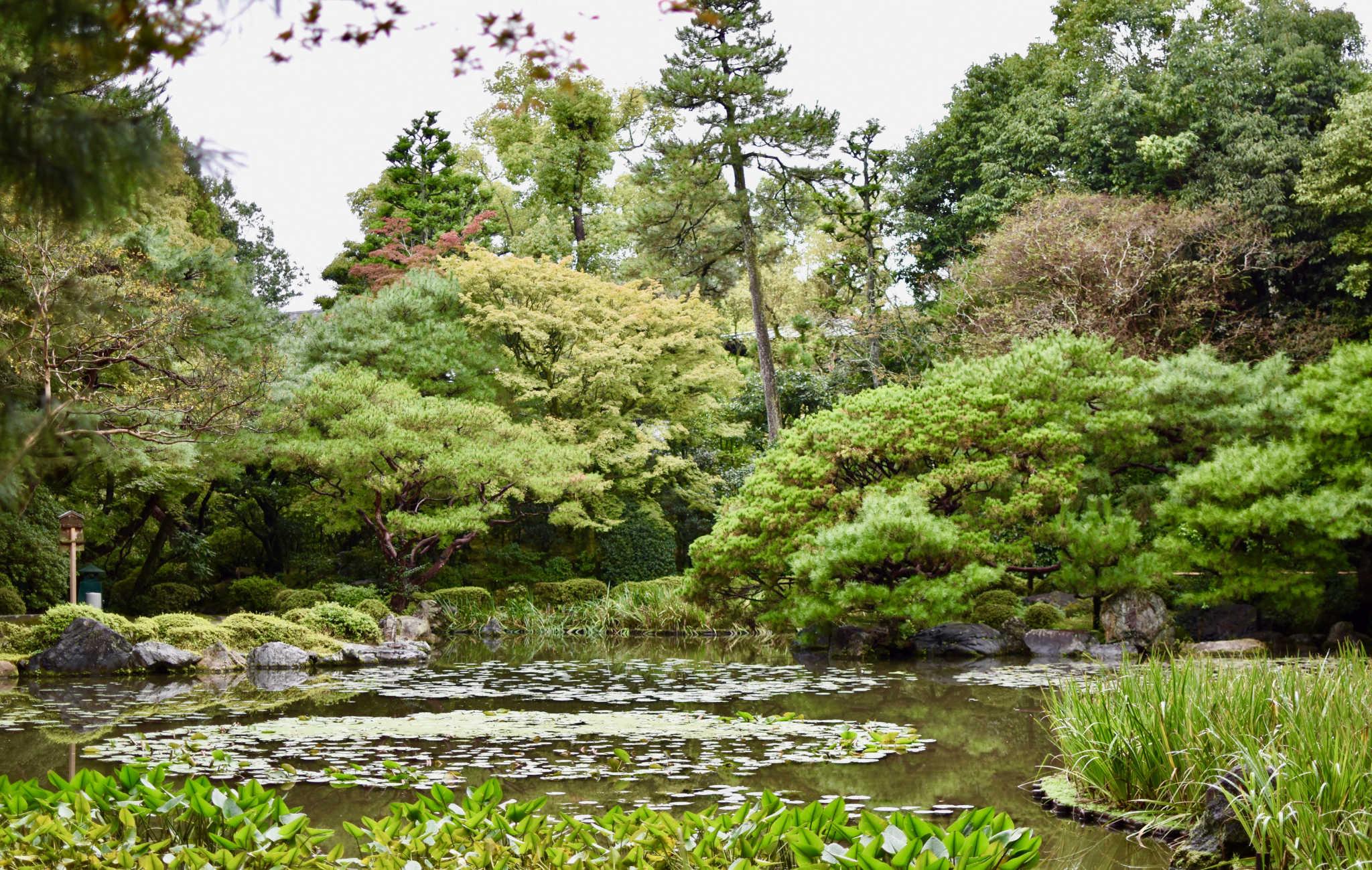 Un premier lac, bordé de pins et de nombreux autres arbres