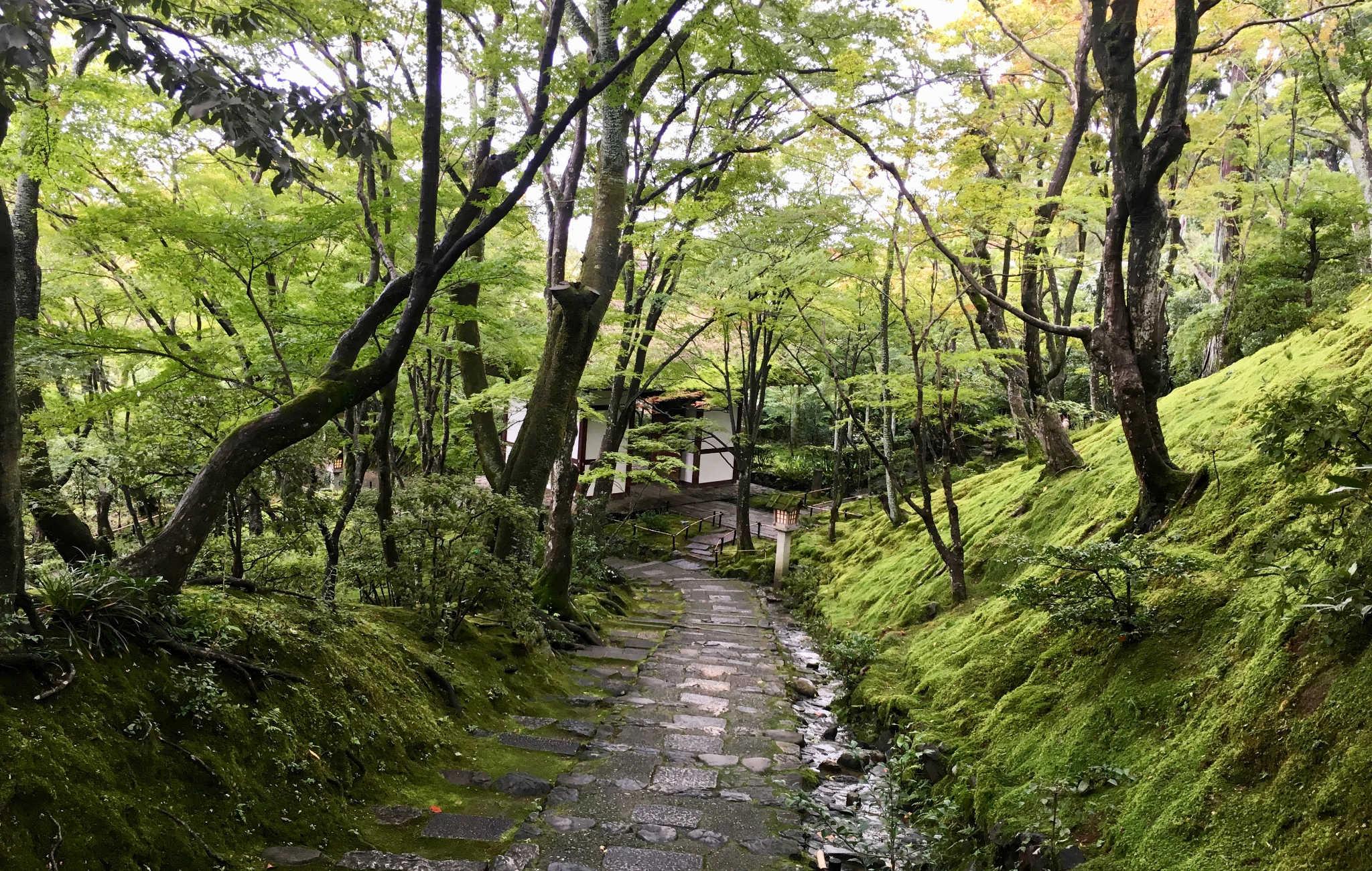 Petit chemin de sous-bois entouré d'arbres et de mousses