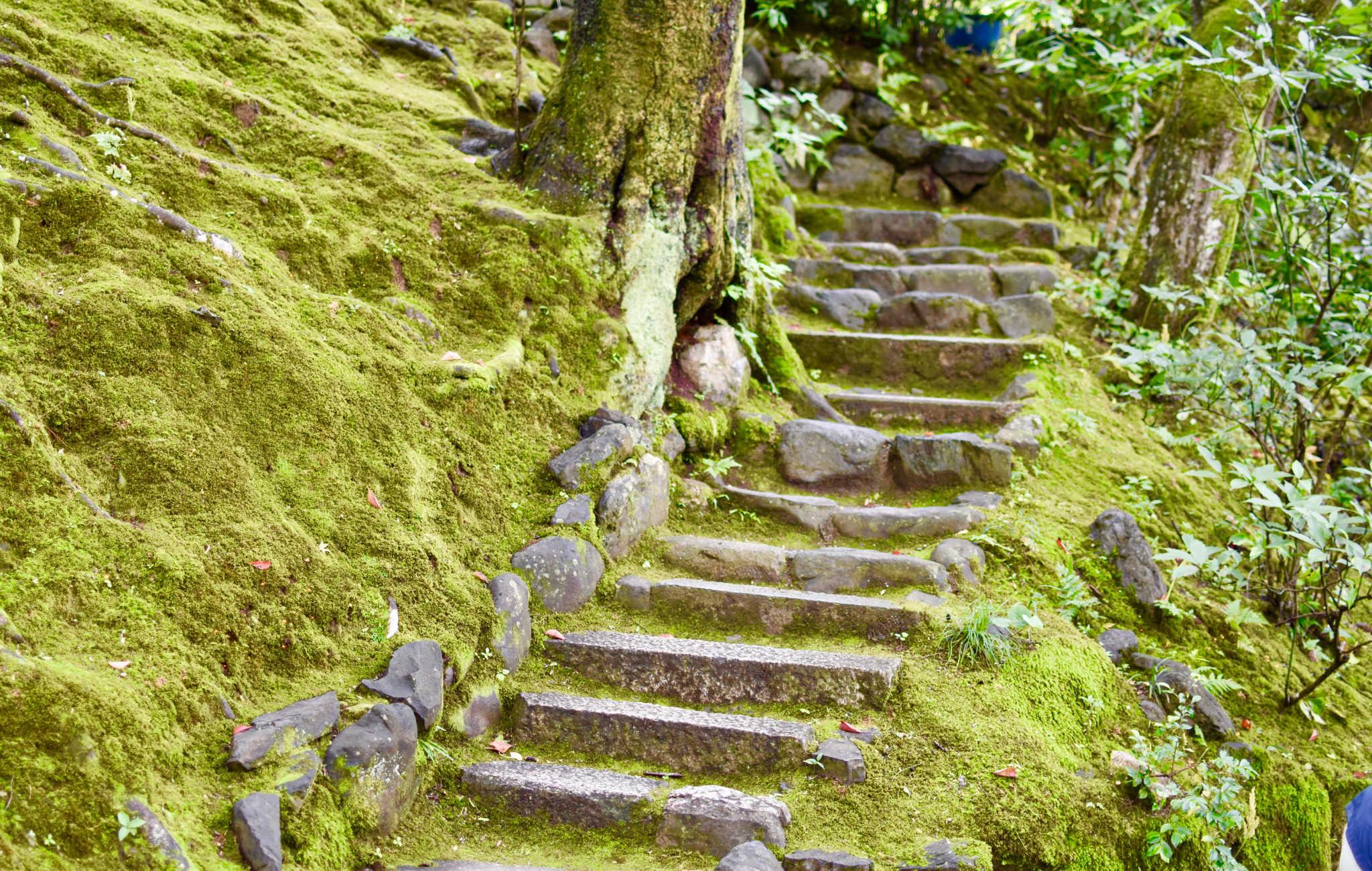 Escalier de pierre recouvert par la mousse au fil du temps