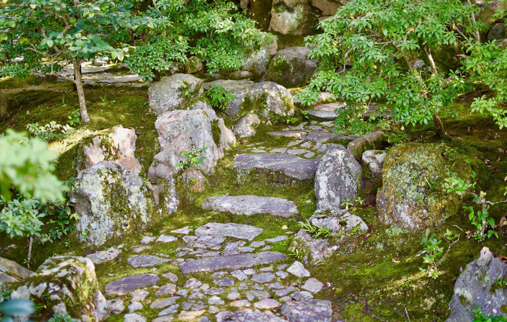 Petit chemin de pierres entouré de mousse