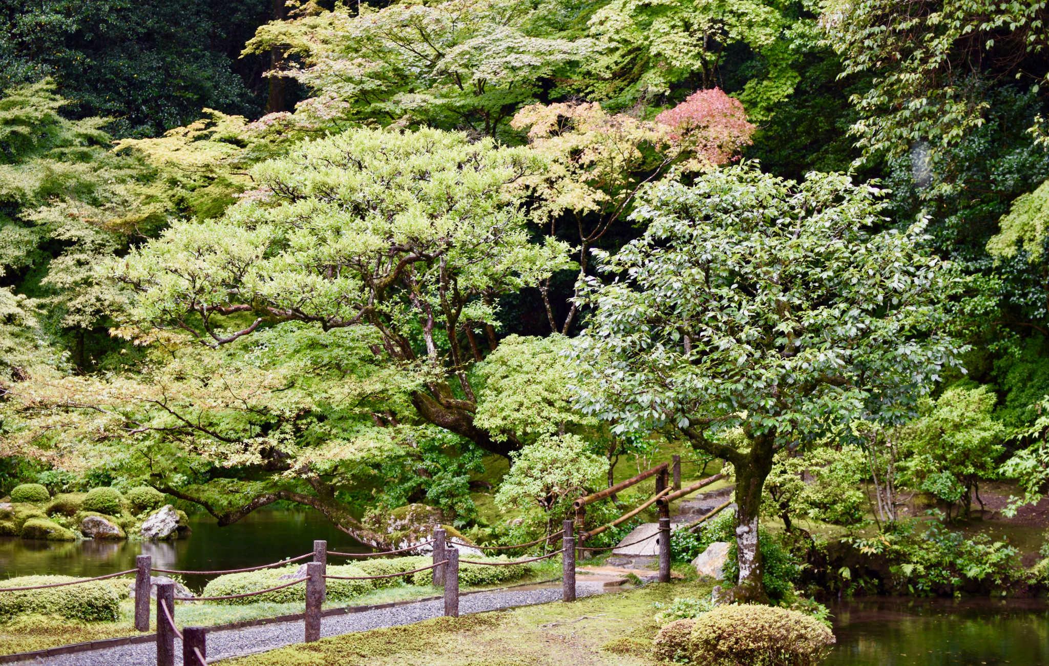 Une promenade rafraichissante aumilieu d'arbres