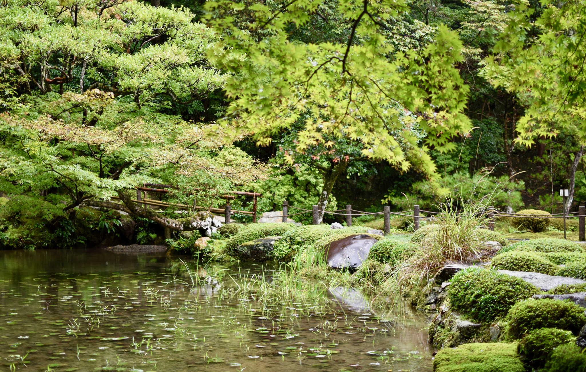Un petit étang et ses érables