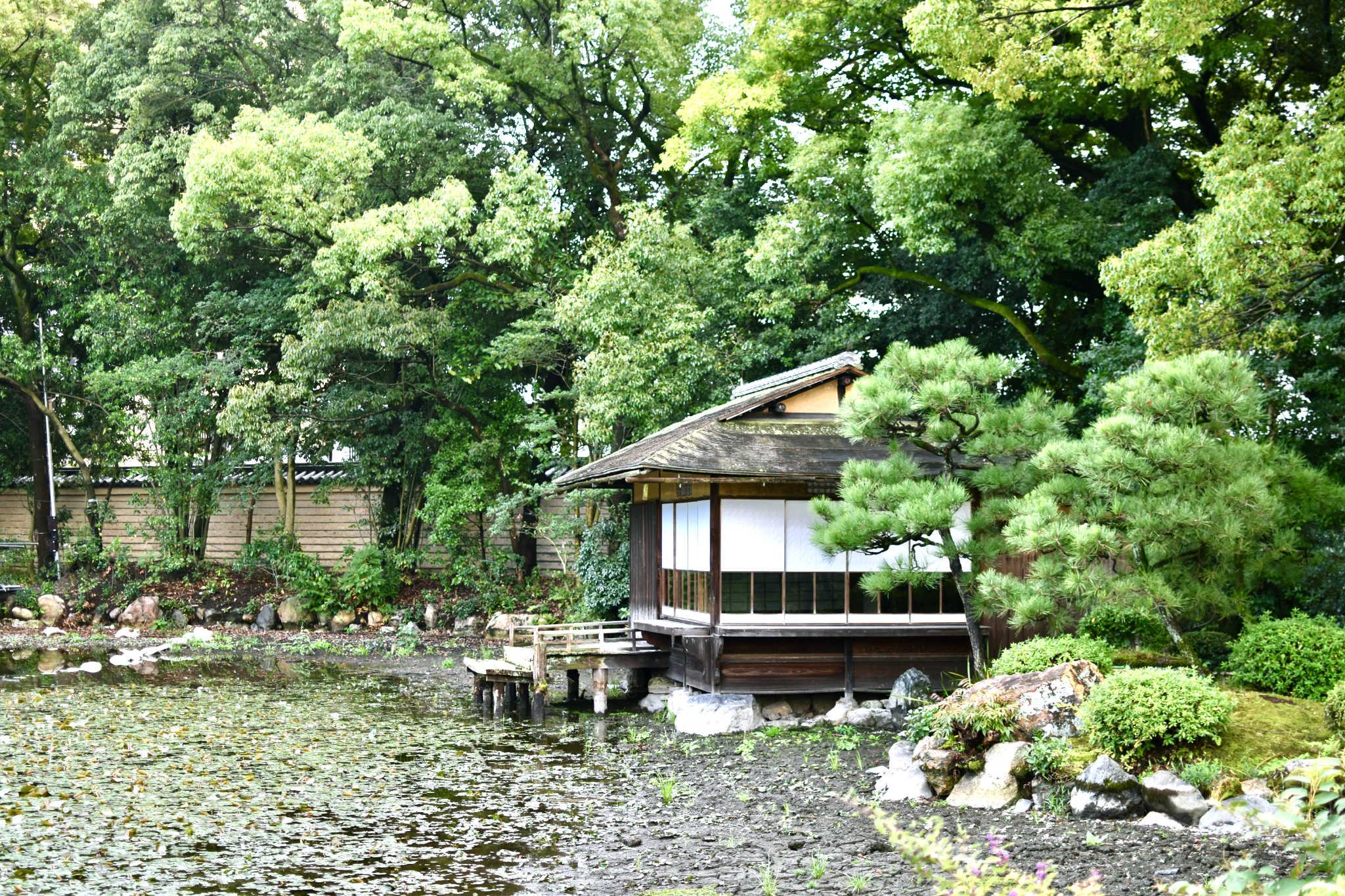 Une autre maison de thé, perdue au milieu des arbres