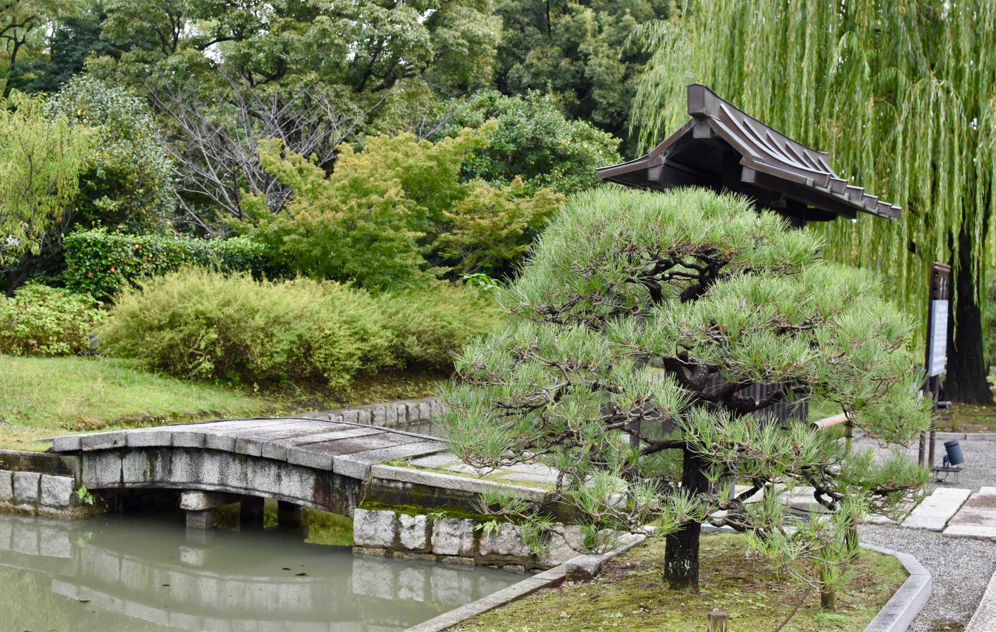 Pins taillés, un pont qui ejambe le plan d'eau, c'est là un jardin typiquement japonais