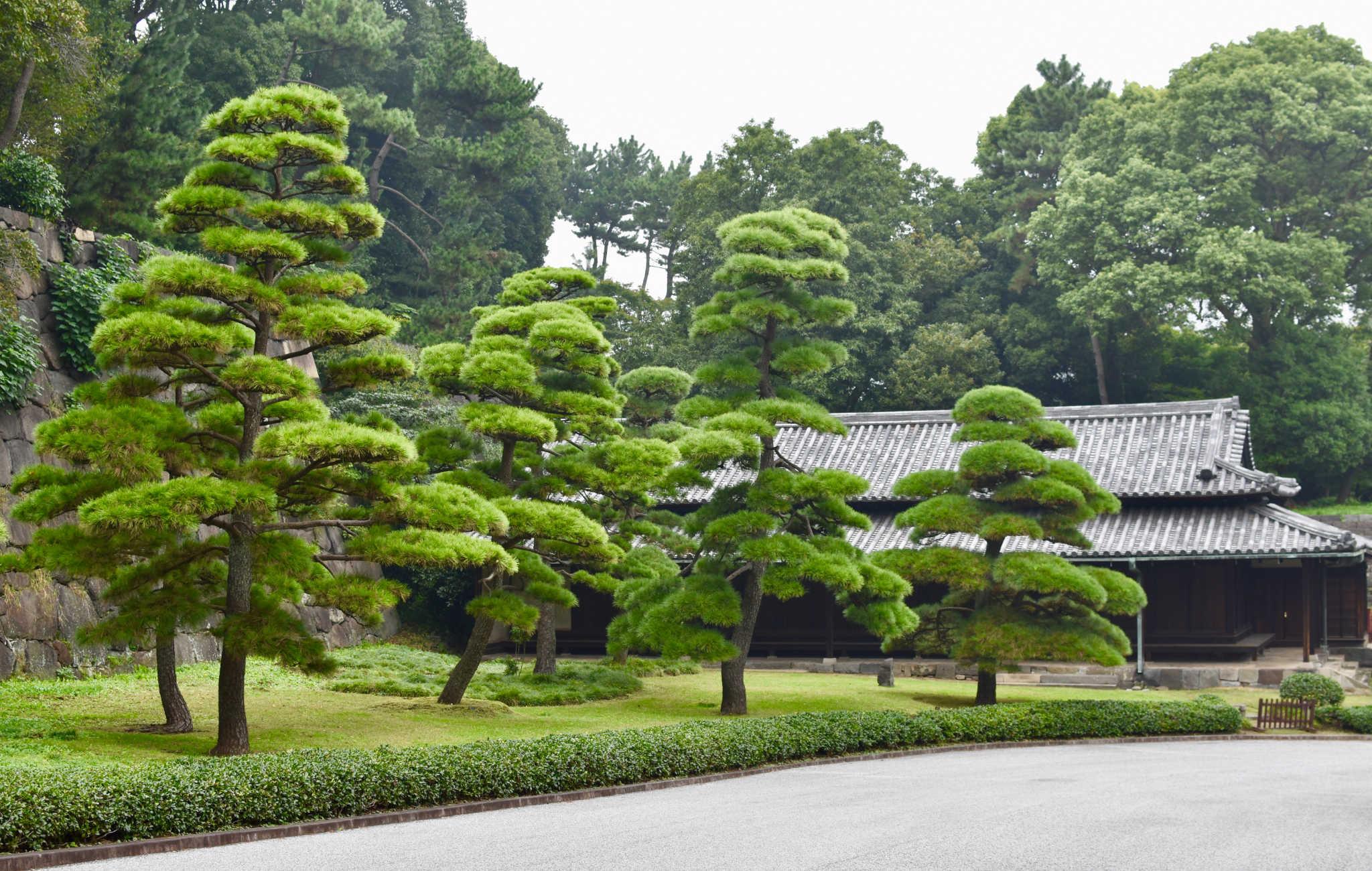 Le parc du palais impérial est remarquable pour ses nombreux pins taillés