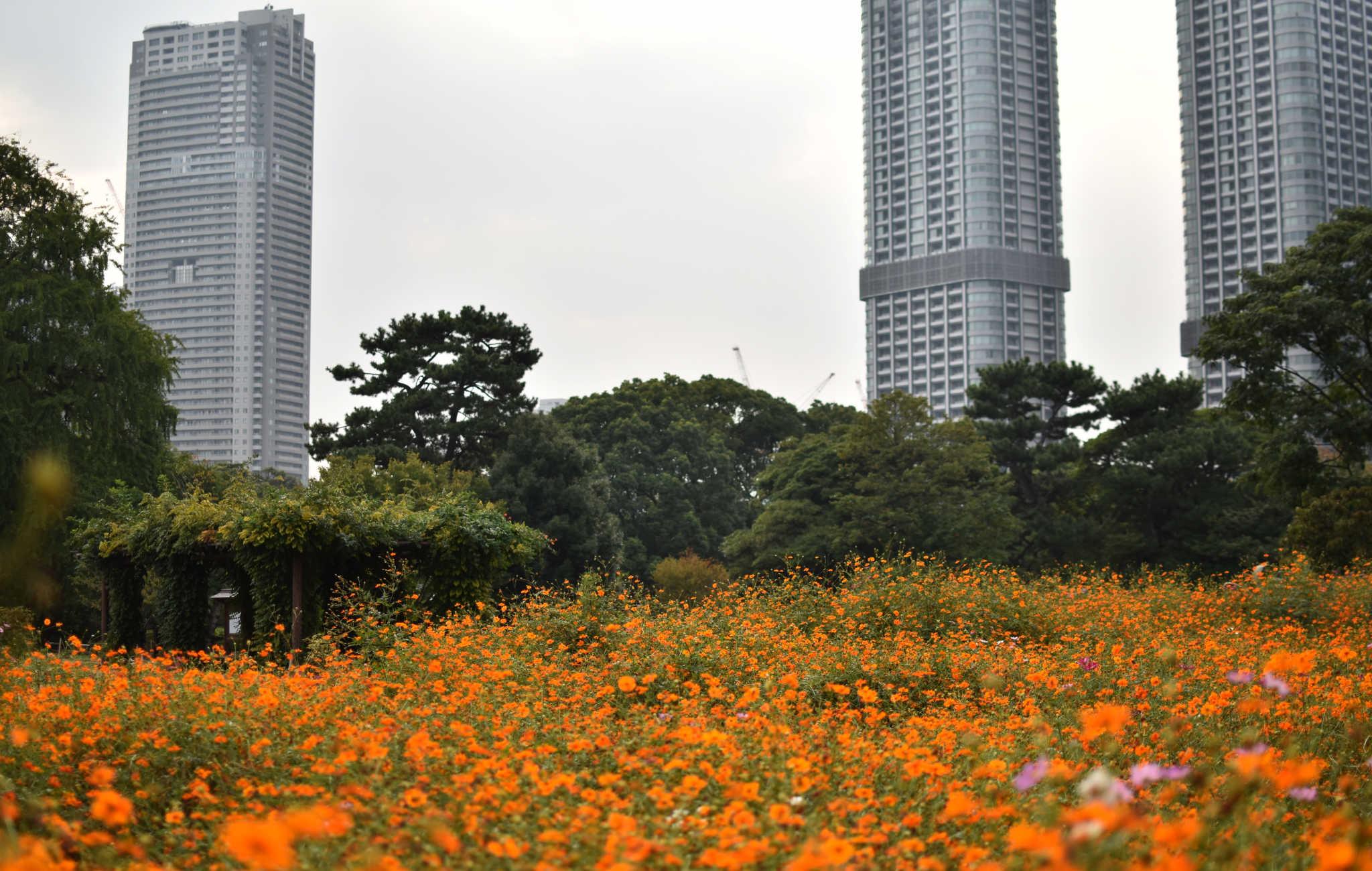Hama-Rikyu est un cadre de nature en plein centre ville, avec des zones très fleuries
