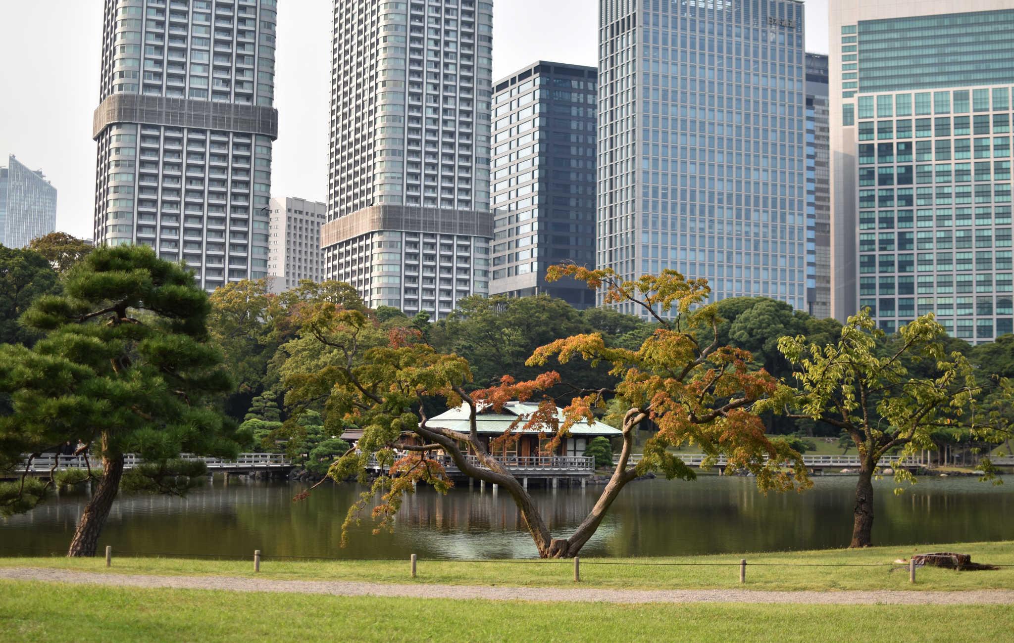 La maison de thé Nakajima sur fond de gratte-ciels