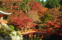 Daigo-ji, le temple des fleurs au sud de Kyoto
