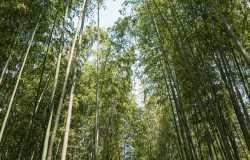 4 jours à Kyoto : circuit des sites incontournables