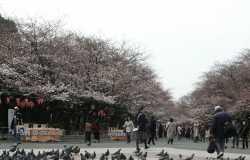 Ueno : le grand parc au coeur de Tokyo
