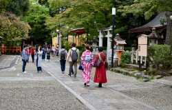 Parc de Maruyama, pour fêter Hanami à Kyoto