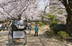 Parc Sumida : une retraite accueillante après la découverte d'Asakusa