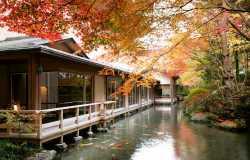Quand partir au Japon pour admirer les feuilles rouges des érables?