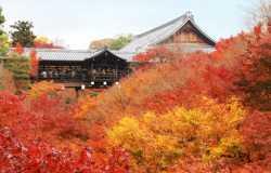 Tofuku-ji, temple majeur du bouddhisme zen à Kyoto